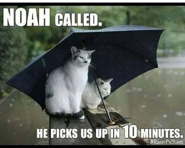 cats_in_the_rain.thumb.jpg.62afceea9290f