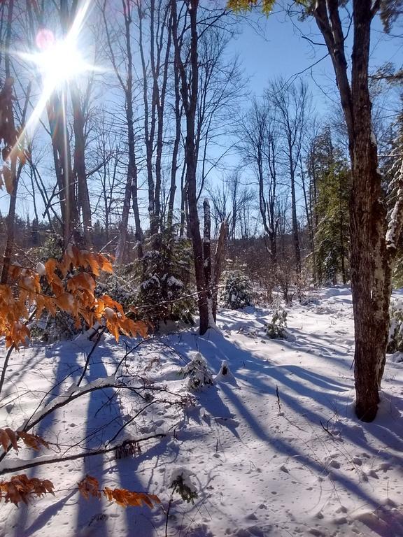 snowshoeing12_31.17-1.jpg.463f825e55744a5eccdf8981fde80c87.jpg