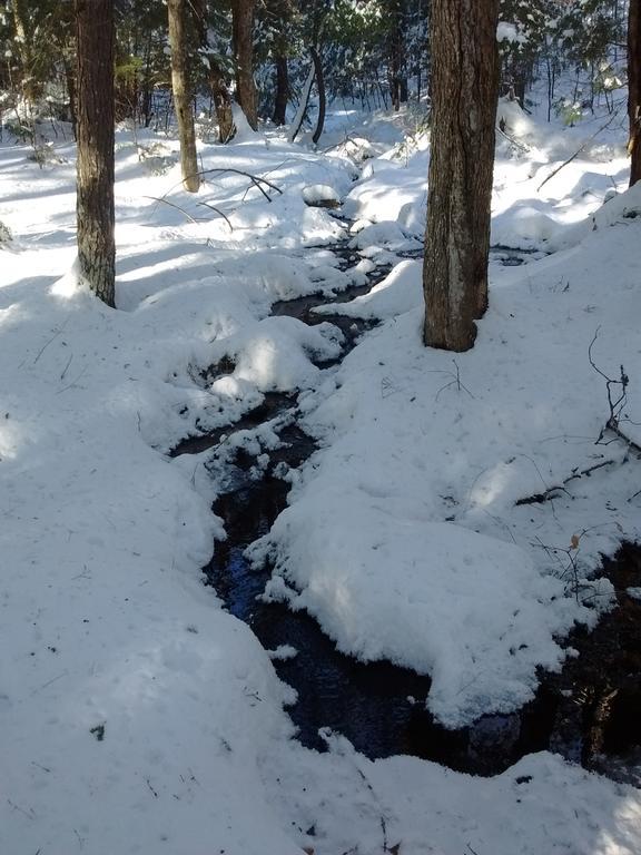 snowshoeing12_31.17-3.jpg.2ead8b3c1e4b7ef33891170e3d906046.jpg
